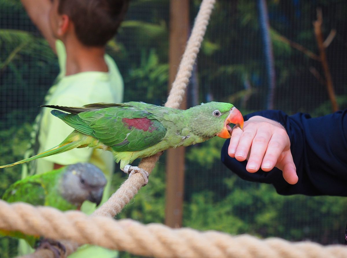 papugarnia Jarosławiec